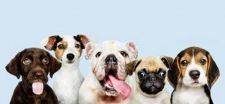 group-portrait-adorable-puppies.jpg